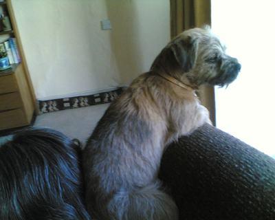 Briar on my shoulder