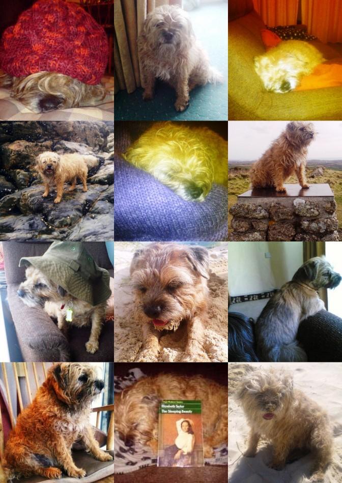 Briar's Collage