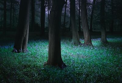 flowers-forrest-nature-night-trees-Favim_com-75106